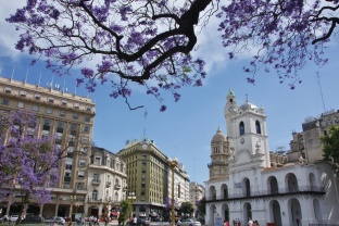 City of Jacarandas